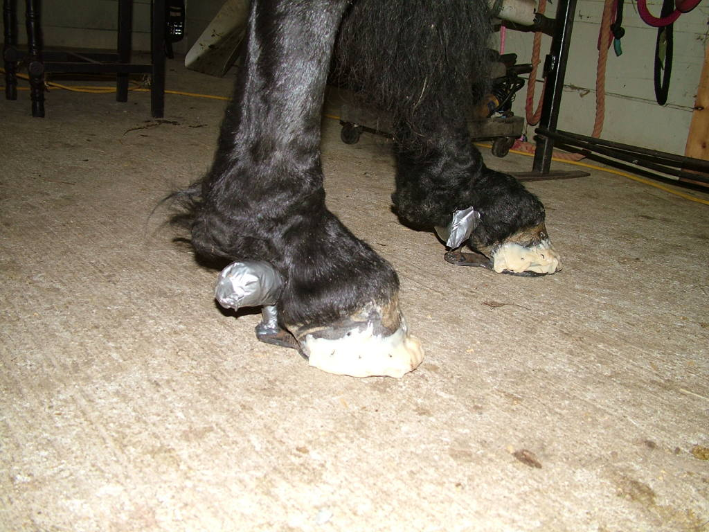 Gel Wraps For Horses it is Wrapped With a Gel Pad